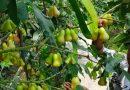 Bermula dari Alquran, Air Hujan Disulap Jadi Pupuk dan Pestisida Alami